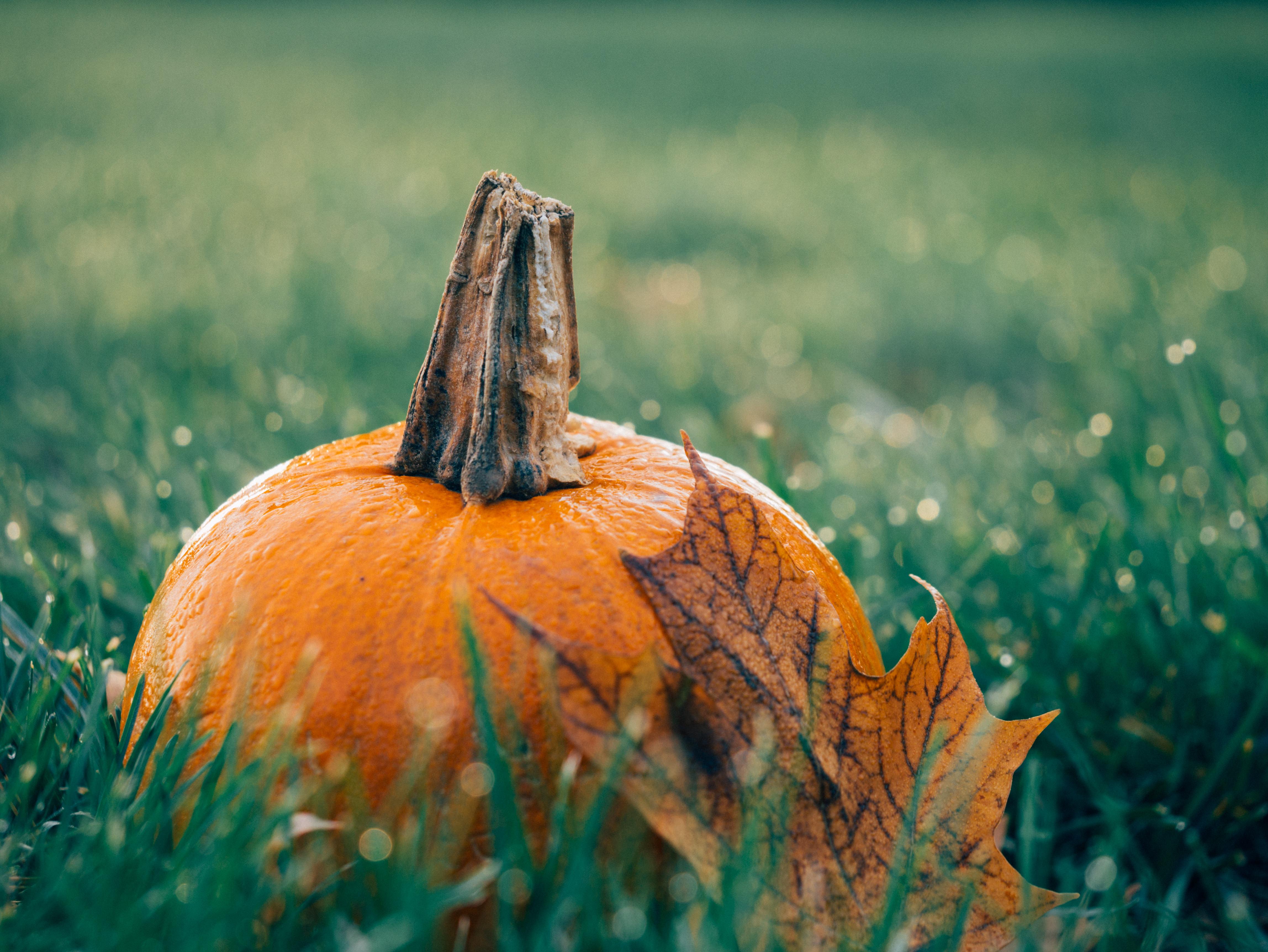 Not So Spooky Pumpkin Recipe Ideas